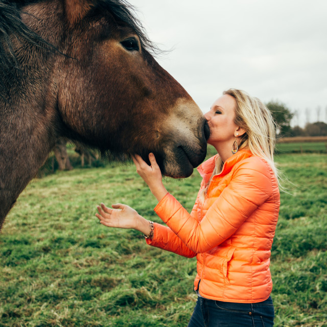 """Kissing A Horse"" stock image"