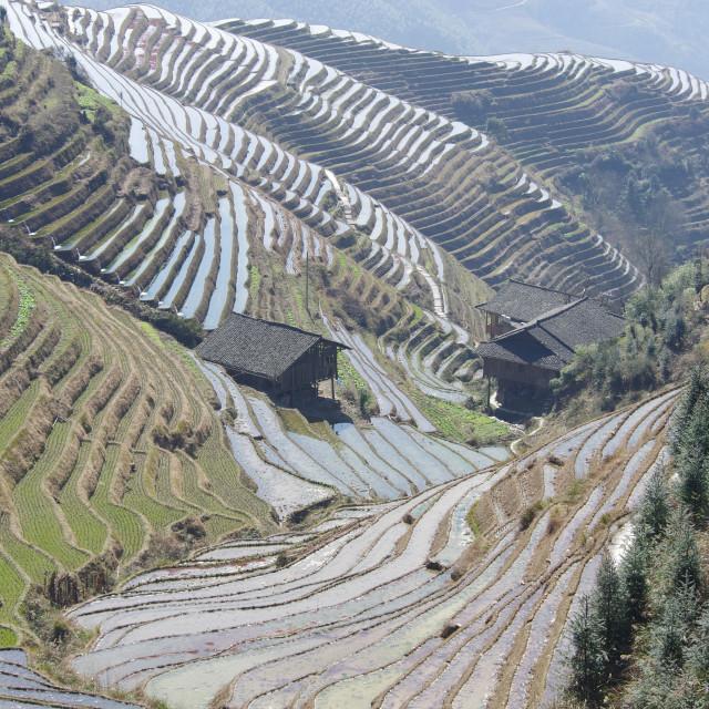 """""""Longji Rice Terraces"""" stock image"""