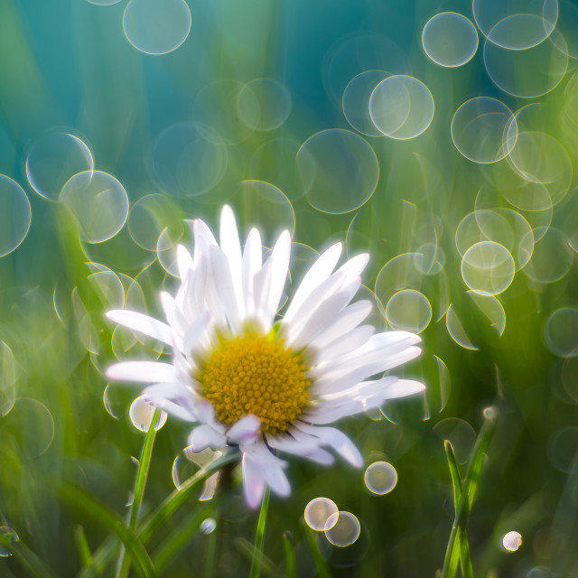"""""""Just one little flower"""" stock image"""