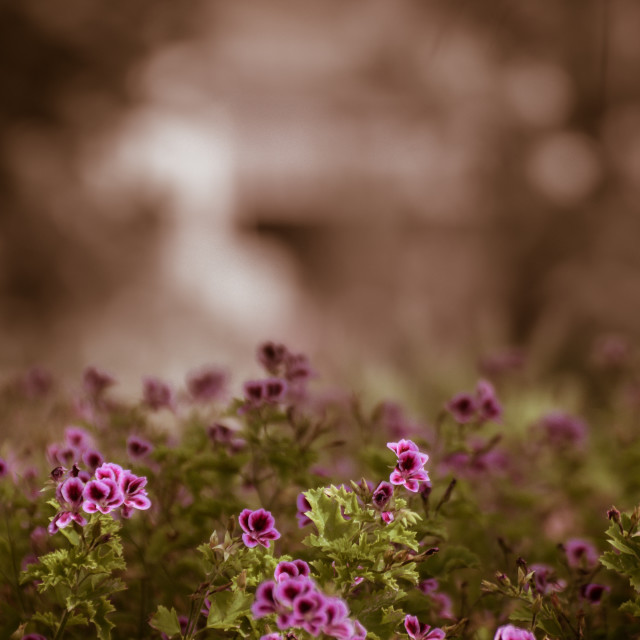"""""""Floral background with space for text"""" stock image"""