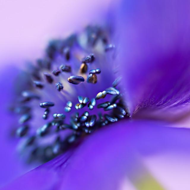 """Purple Heart"" stock image"