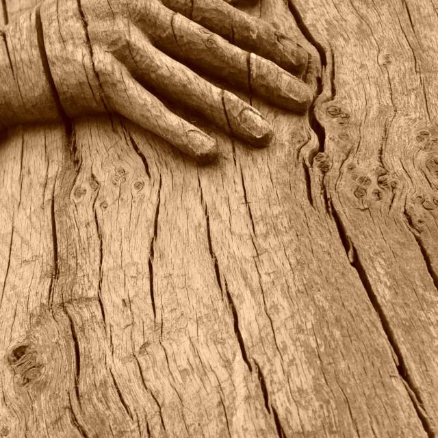 """Oak Carved Hand 0526"" stock image"