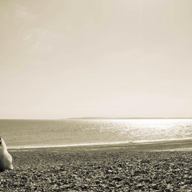 """""""Kodi on hayling beach"""" stock image"""