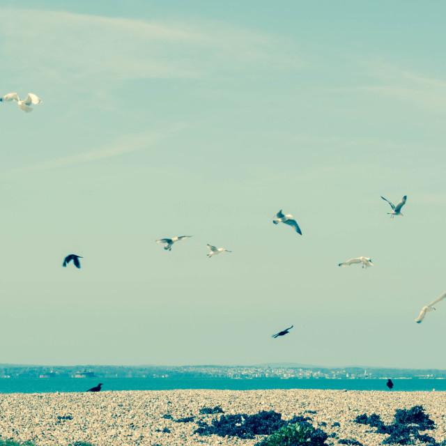"""Feeding seagulls"" stock image"