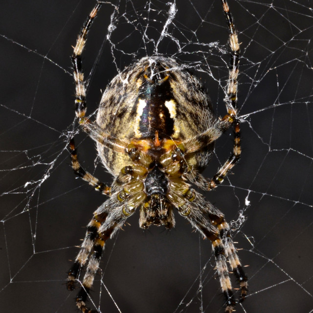 """""""Spider in its web"""" stock image"""