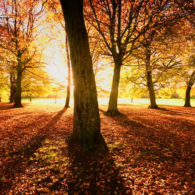 """Autumn Glory"" stock image"