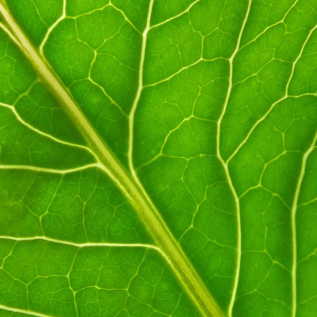 """Green leaf"" stock image"