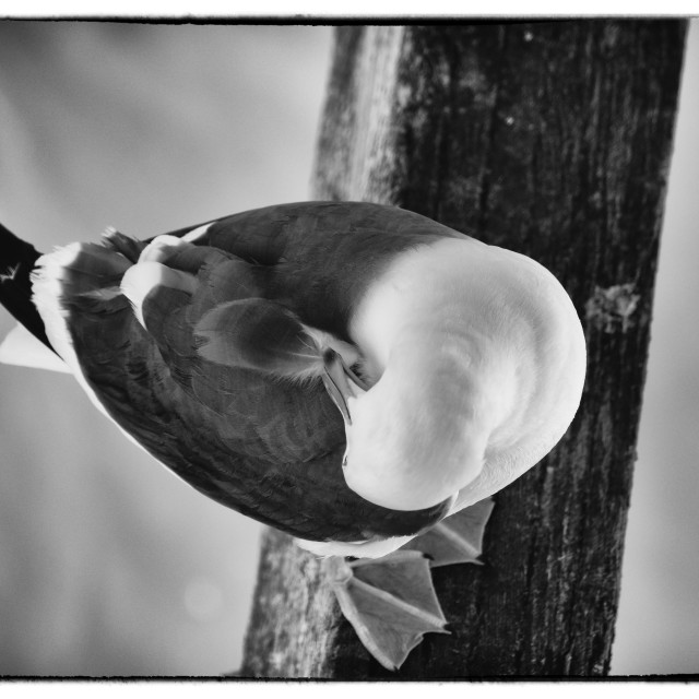 """""""Seagull Moments"""" stock image"""