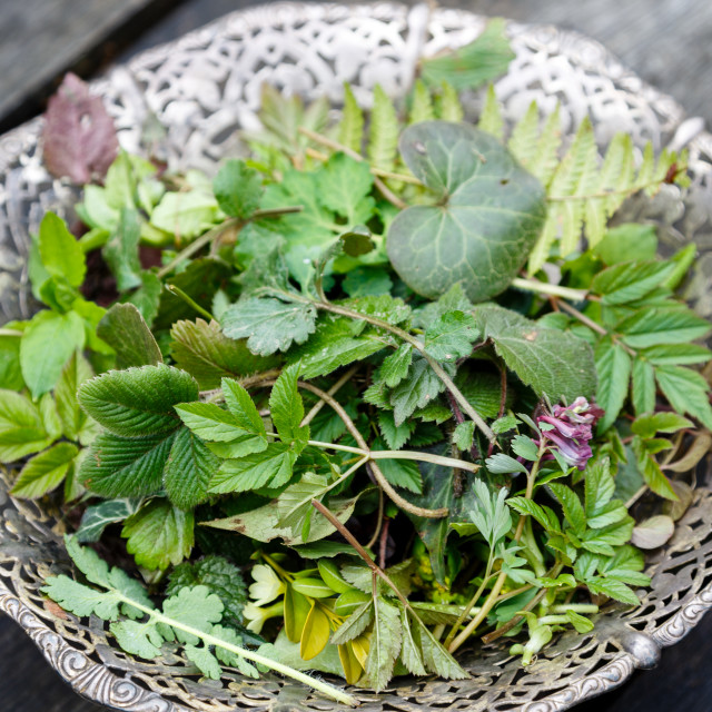 """""""Forest herbs and leaves in metalic bowl on wooden table"""" stock image"""