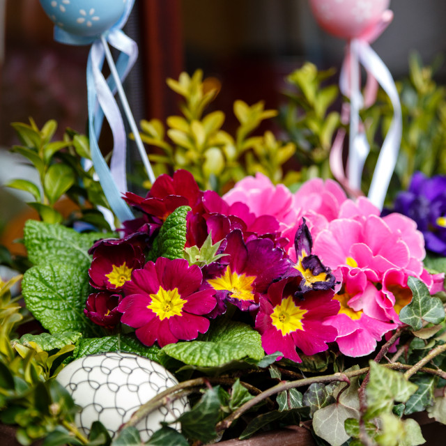 """""""Primroses with easter eggs"""" stock image"""