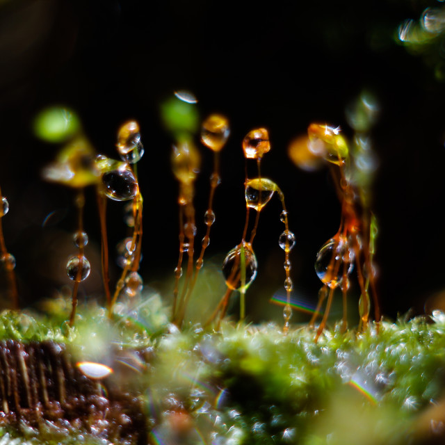 """""""Moss with water drops & bokeh"""" stock image"""