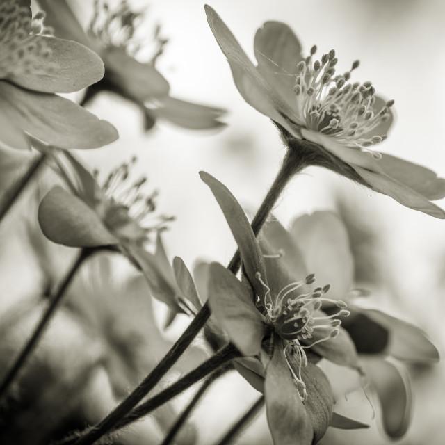 """""""finalmente primavera"""" stock image"""