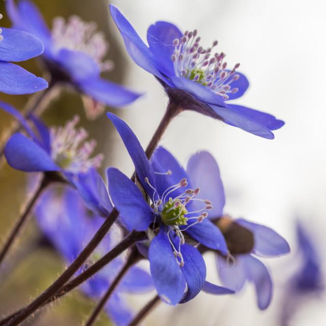"""""""finalmente primavera (color)"""" stock image"""