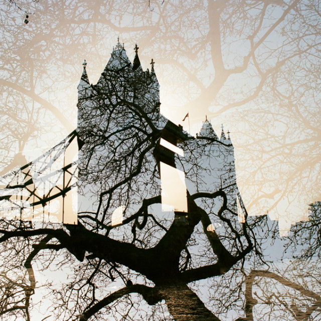 """tower in trees"" stock image"