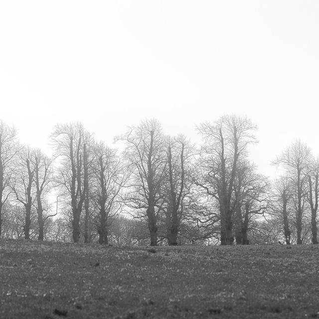 """Line of Trees"" stock image"