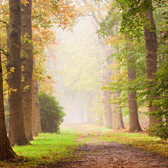 """""""Autumn Glow"""" stock image"""