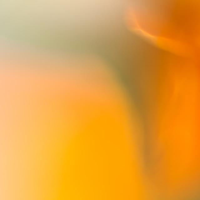 """Marigold"" stock image"