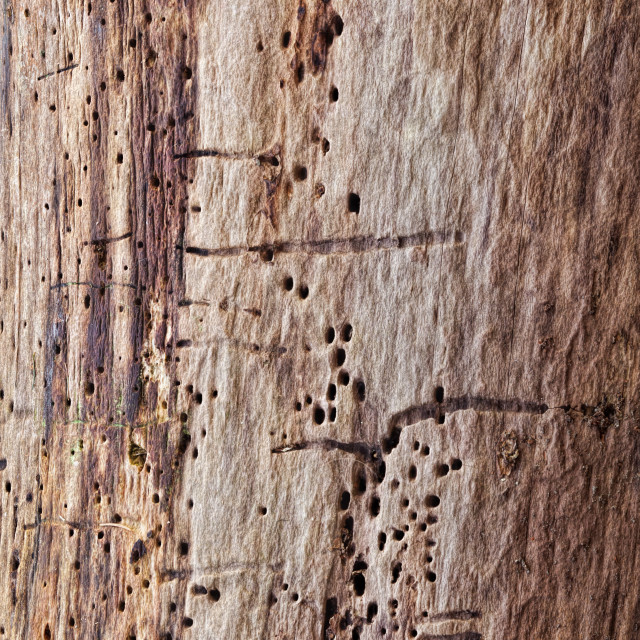 """""""Tree Trunk Abstract"""" stock image"""