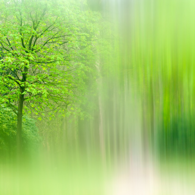"""""""Forest Abstract"""" stock image"""