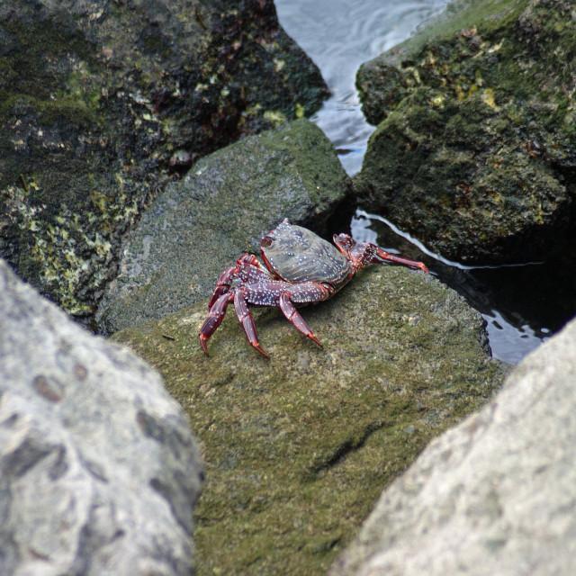 """Crab."" stock image"