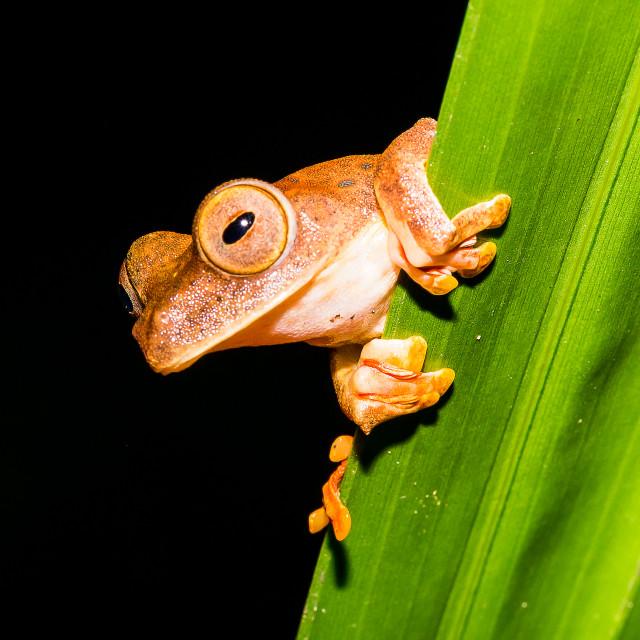 """Frog"" stock image"