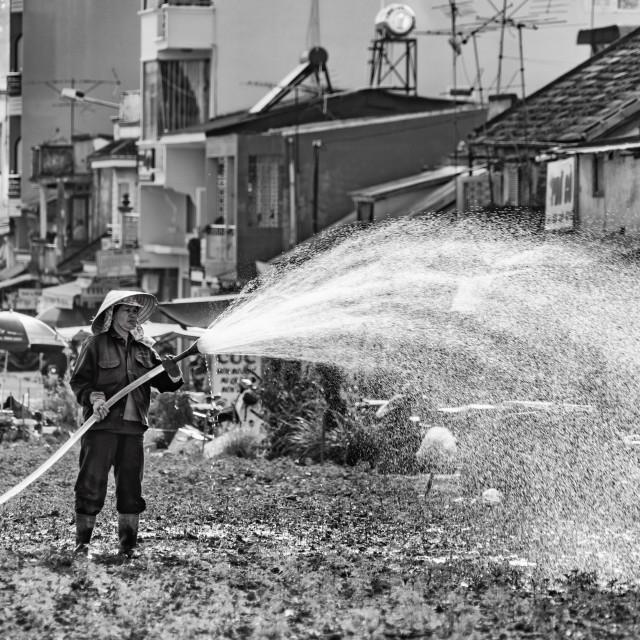 """Watering"" stock image"