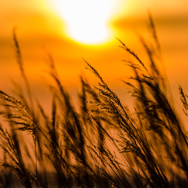 """""""The Suns Golden Glow"""" stock image"""
