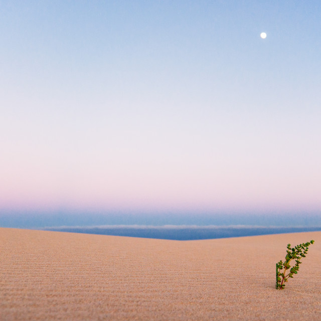 """""""Lonely plant"""" stock image"""