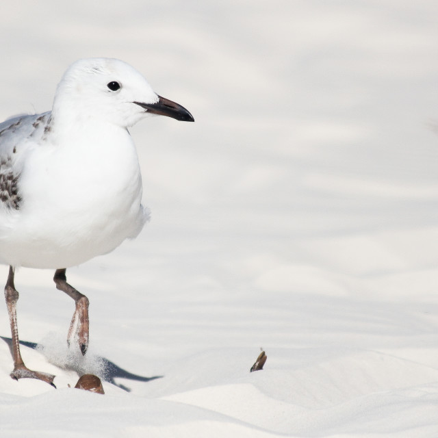 """Seagull on Sand"" stock image"
