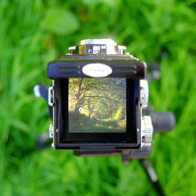 """woodland through my TLR camera"" stock image"