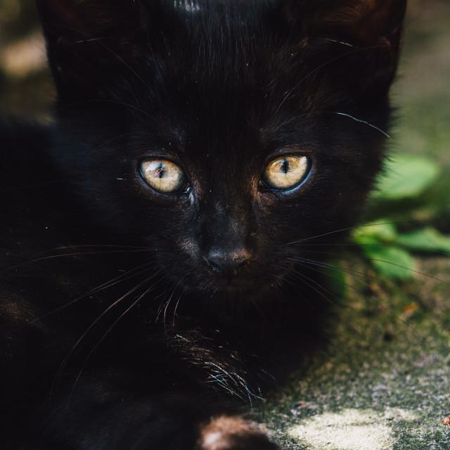 """Black Kitten Lying Down Closeup"" stock image"