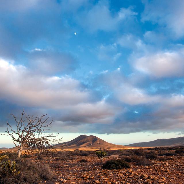 """""""Fuerteventura desert"""" stock image"""