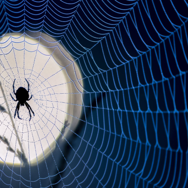 """Moon Spider"" stock image"