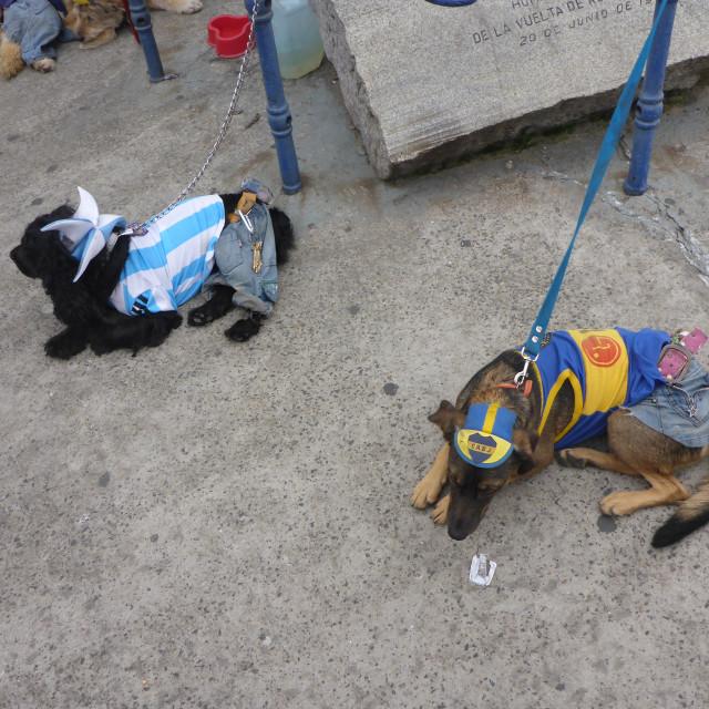 """Dogs of La Boca"" stock image"