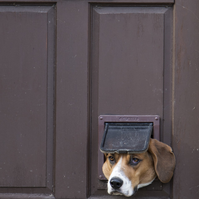 """Dog in Catflap"" stock image"