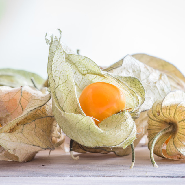 """""""Physalis peruviana fruit on a table"""" stock image"""