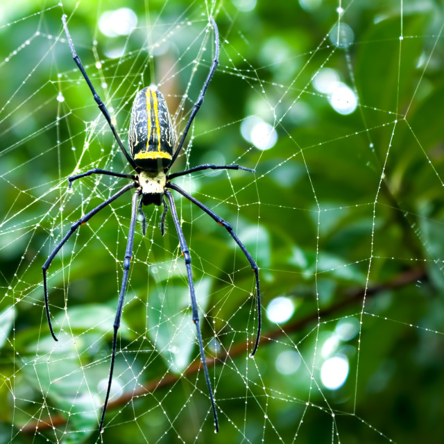 """""""Spider On Web"""" stock image"""