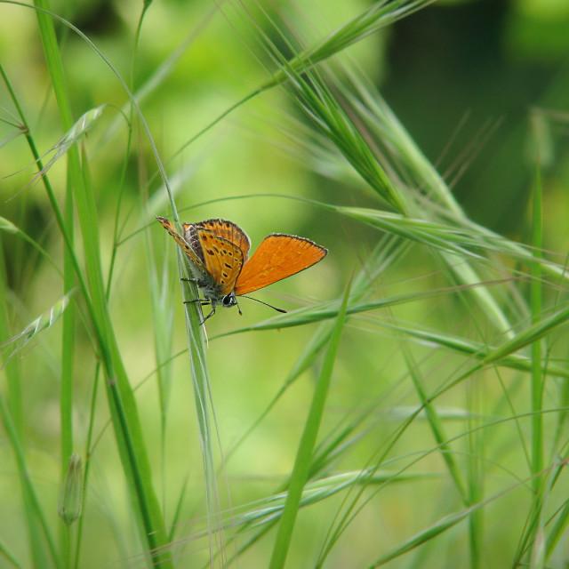 """Buterfly in garden"" stock image"