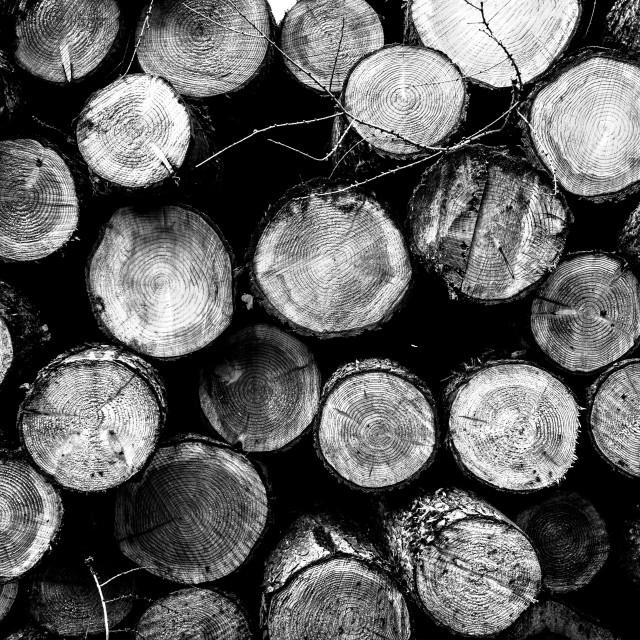 """Timber"" stock image"