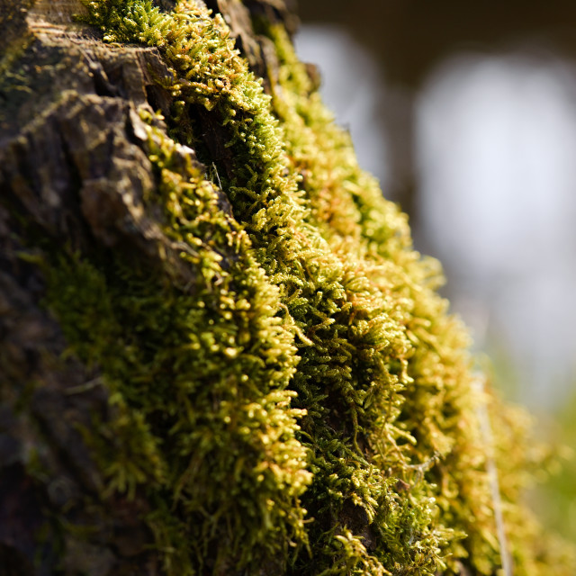 """""""Spring moss on an old stump"""" stock image"""