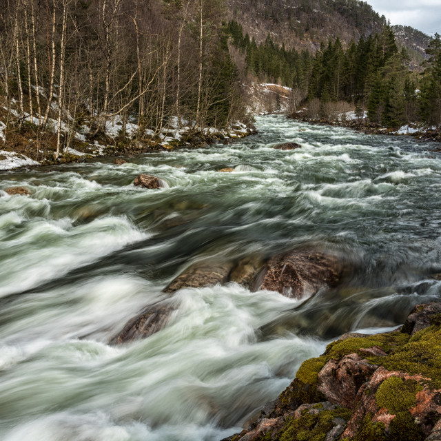 """""""Forest river"""" stock image"""