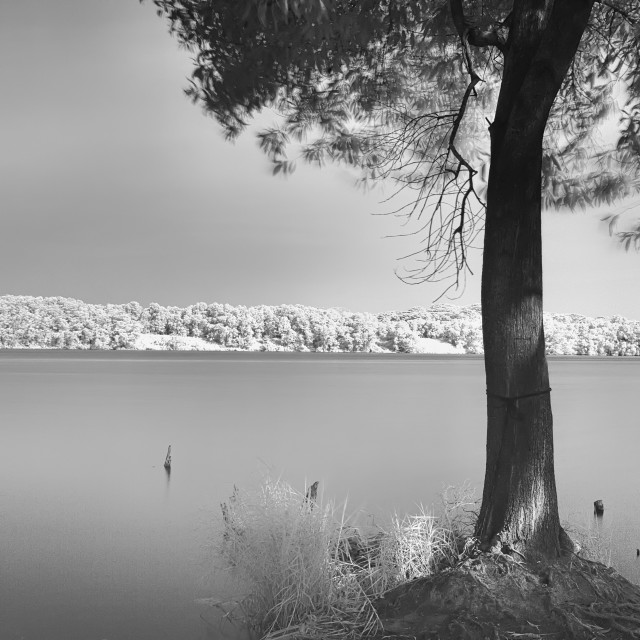"""""""Tree on the shore"""" stock image"""