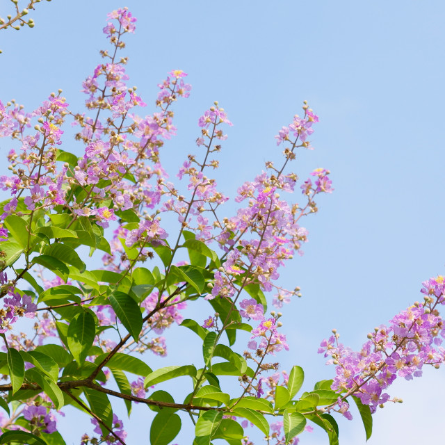"""Nice summer purple flowers with blue sky"" stock image"
