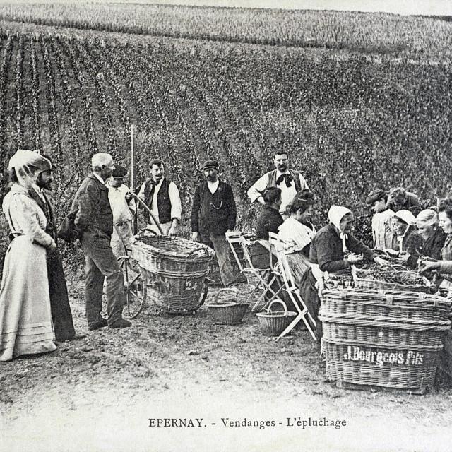 """old postcard, Epernay, harvest"" stock image"