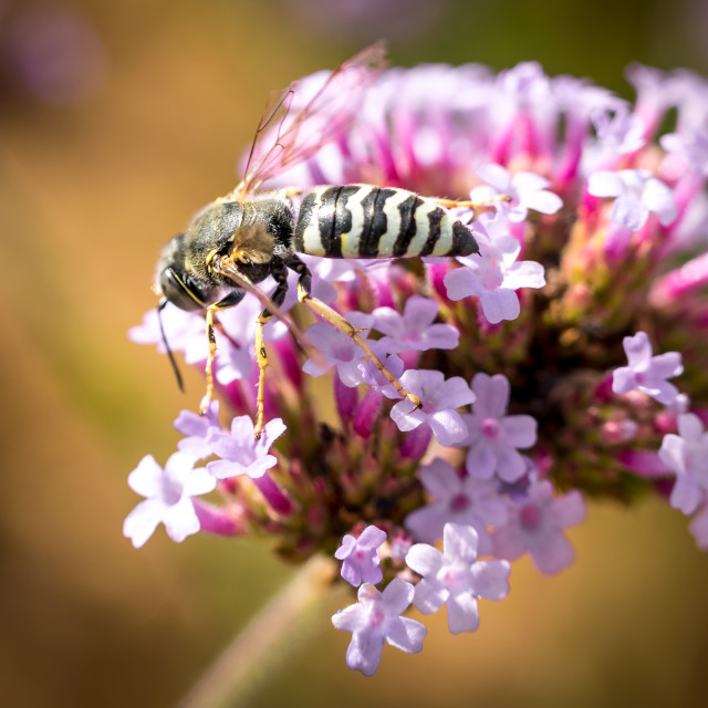 """""""White wasp on a flower"""" stock image"""