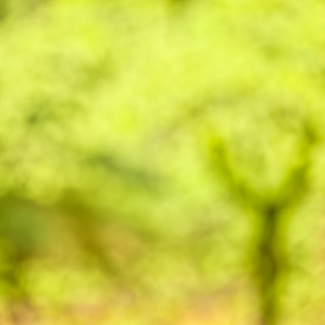 """""""Tree Abstract"""" stock image"""