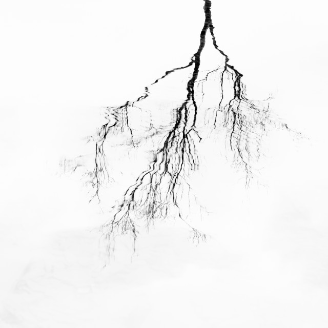 """Lone Tree Reflection"" stock image"