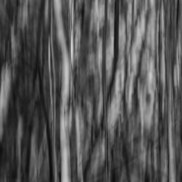 """Can't see the wood from the Trees (2)"" stock image"