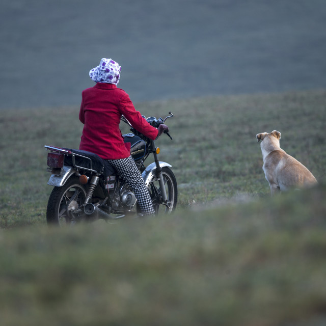 """Herder and her dog on the grassland.,China"" stock image"