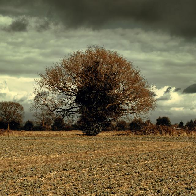 """""""Cinematic Tree"""" stock image"""